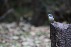 青い鳥の幸せ、その実体(1)