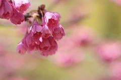 春の色に浮かれて
