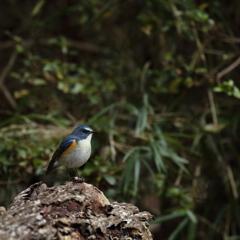青い鳥の幸せ、その実体(3)