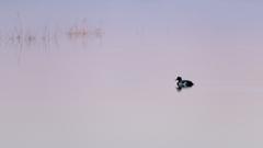 水面のビーナスベルト
