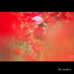 花の丘 シャレーポピー 7