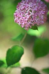 初夏の花 4