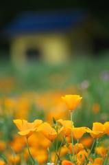 花の広場 2