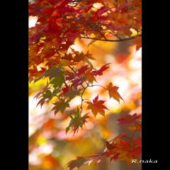 公園の紅葉 1