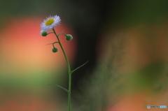 公園の赤い森 Ⅱ お花達 4