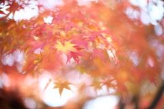 公園 50mmの紅葉