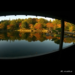 公園の紅葉 8