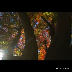公園の紅葉 9