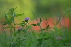公園の赤い森 Ⅱ お花達1