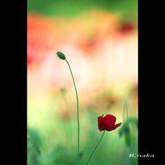 花の丘 シャレーポピー 5