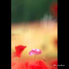 花の丘 シャレーポピー 6