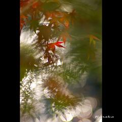 公園の紅葉 6