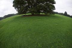 公園に行って来ました。