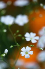 花の広場 1