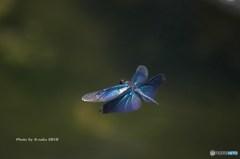 真夏のブルー 1