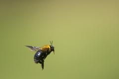 公園の飛んでる虫