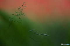 公園の赤い森 Ⅱ お花達 ? 6