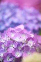 初夏の花 3