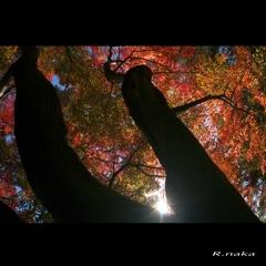 公園の紅葉 10