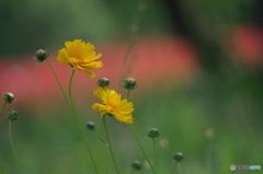 公園の赤い森 Ⅱ お花達 7
