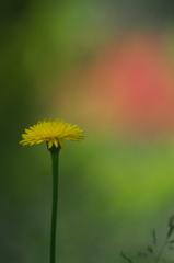 公園の赤い森 Ⅱ お花達 2