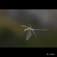 飛翔のギンヤンマ 4