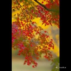 公園の紅葉 14