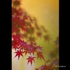 公園の紅葉 12