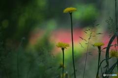 公園の赤い森 Ⅱ お花達 3