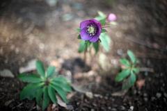 公園春の花