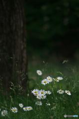 公園 マーガレットの森 6