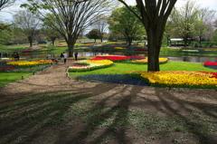 昭和記念公園に行って来ました 1