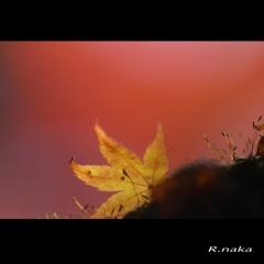 公園の紅葉 13