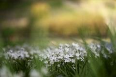 公園の花達