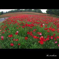 花の丘 風景