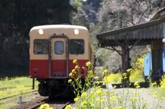 小湊鉄道の春