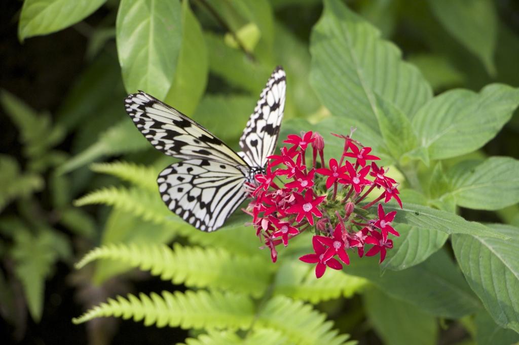 蝶々園にて。
