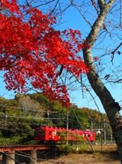 貴志川線秋景色(2)