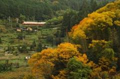 山岳列車(4)-紅葉満開