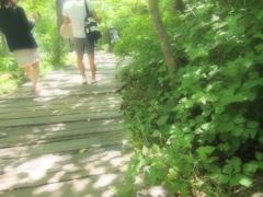 森の中の散歩道
