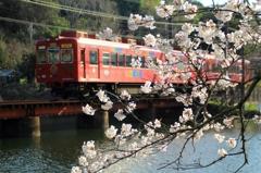 桜の大池(2)