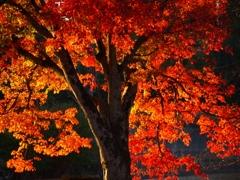 晩秋の輝き(2)