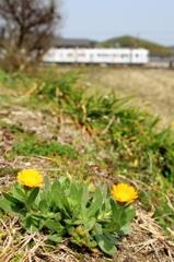 春の気配(1)