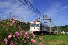 青空とコスモスといちご電車