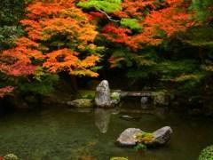 紅葉の庭園(2)