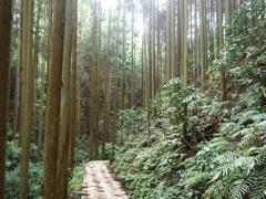 巡礼の道(8) 下山