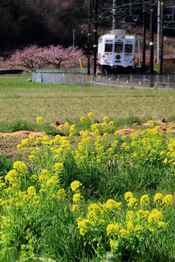里の春(3)