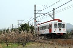梅といちご電車