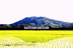 名草山とたま電
