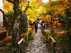 紅葉の庭園(3)